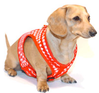 Picnic Red Classic Never-Choke Dachshund Harness