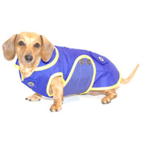Blueberry Sorbet Dachshund Raincoat