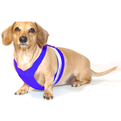 Royal Blue Easy-Go Never-Choke Dachshund Harness