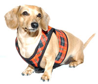 Tartan Plaid Winter Classic Never-Choke Dachshund Harness