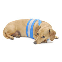 Turquoise Easy-Go Never-Choke Dachshund Harness
