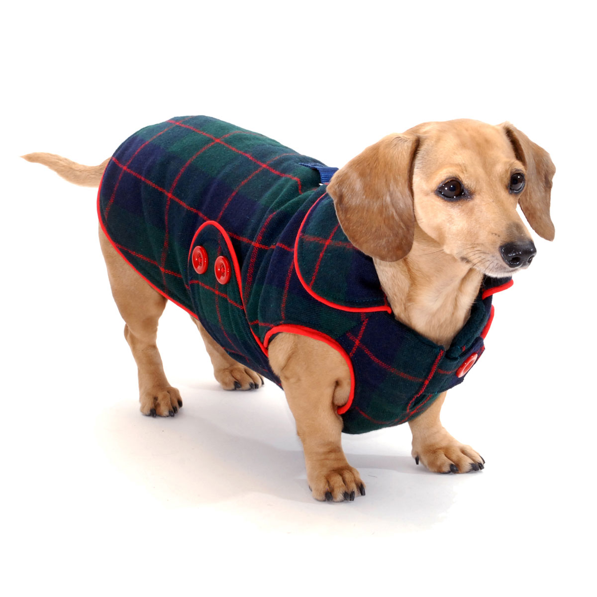 Mackenzie Plaid Dachshund Coat Reversible