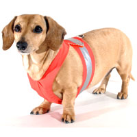 Flame Orange Easy-Go Never-Choke Dachshund Harness