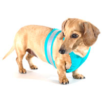 Truly Teal Easy-Go Never-Choke Dachshund Harness