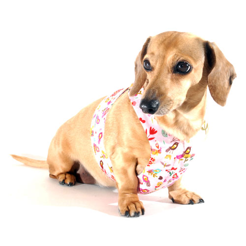Reversible Tweet Tweet Easy-Go Never-Choke Dachshund Harness