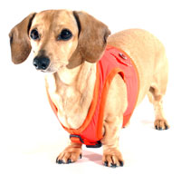 Raisin Brown Classic Never-Choke Dachshund Harness