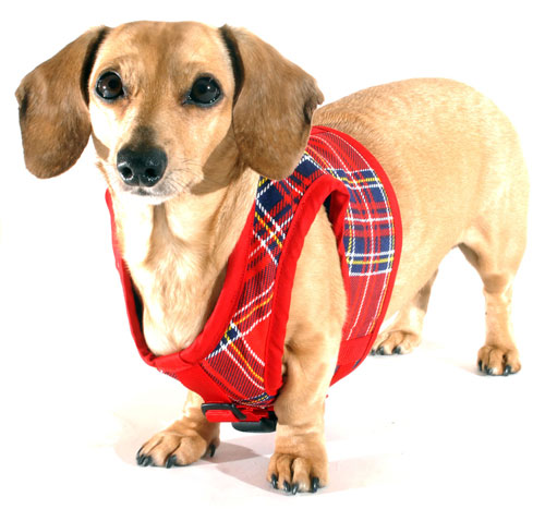 Spencer Plaid Winter Classic Never-Choke Dachshund Harness