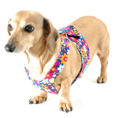 Reversible Summer Flowers Easy-Go Never-Choke Dachshund Harness