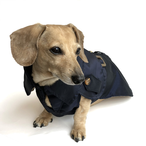 Navy Blue Dachshund Trenchcoat