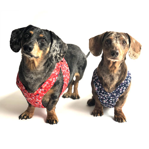 Reversible Dainty Petals Dachshund Harness