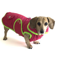 Watermelon Sorbet Dachshund Raincoat