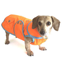 Neon Orange Sorbet Dachshund Raincoat