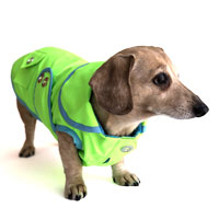 Neon Lime Sorbet Dachshund Raincoat