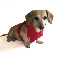 Cherry Red Dachshund Jean Jacket