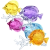 Rainbow Fish Family