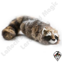 Reality Raccoon Spring Animal