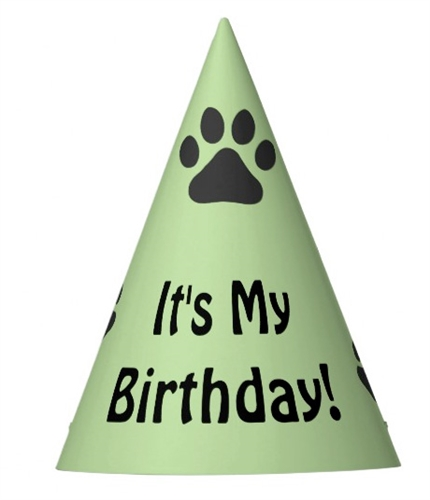 Its My Birthday Hat For Dogs