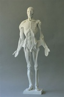 Ecorche Kit with Armature set