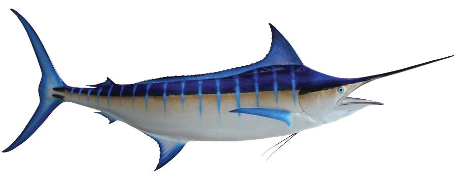 Resultado de imagen para Blue Marlin