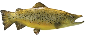 brown trout fishmount