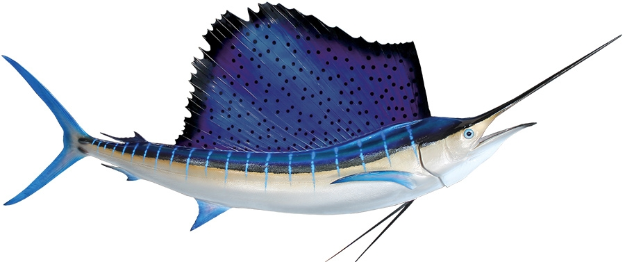 atlantic sailfish mount sailfish replica