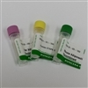 Adiponectin Full Length (Rat) Recombinant