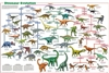 Dinosaur Evolution -Laminated