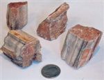 Petrified Wood 1-1/2""