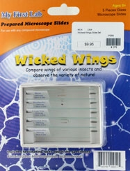 Wicked Wings Slide Set