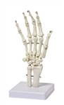 Flexible Hand Skeleton Model