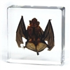 Bat Specimen in Lucite 3""