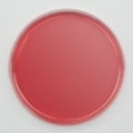 MacConkey Agar Prepared Plate - Set of 10 Plates