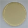 Standard Methods Agar Prepared Plate - Set of 10 plates
