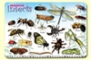 Bugs Insects & Arachnids Placemat