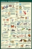 Animal Development Poster -Laminated