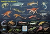 Prehistoric Sea Monsters Poster - Laminated