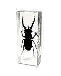 Mountain Stag Beetle Paperweight