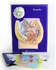 Female Reproductive Model Activity Set