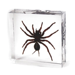 Small Tarantula Paperweight