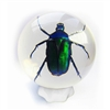 Green Rose Chafer Beetle in Sphere