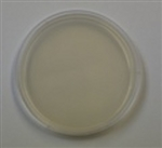 Starch Agar Prepared Plate -Set of 10