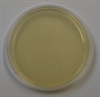 Brain Heart Infusion Agar Prepared Plate -Set of 10