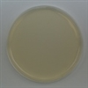 Cetrimide Agar  Prepared Plate -Set of 10 plates