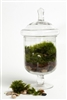 Grazed and Confused Readymade Terrarium
