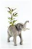 The Elephant in the Room Funky Flora