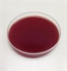 Brain Heart Infusion Agar with 5% Sheep Blood 10 Plates