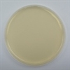 Tryptic Soy Agar with Lecithin & Tween 10 prepared plates