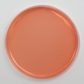 Vogel-Johnson Agar 10 prepared plates