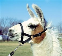 Amish Light Standard Llama Halter