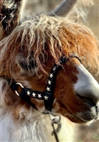 Bling Alpaca Halter - TEMPORARILY UNAVAILABLE